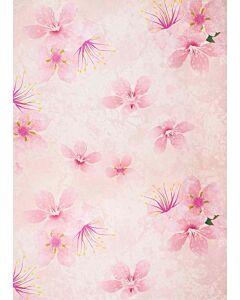 Cherry Blossom **NEDSAT M. 50%**